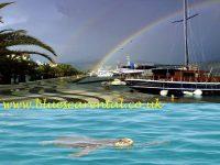 Argostoli Bay-Careta Careta